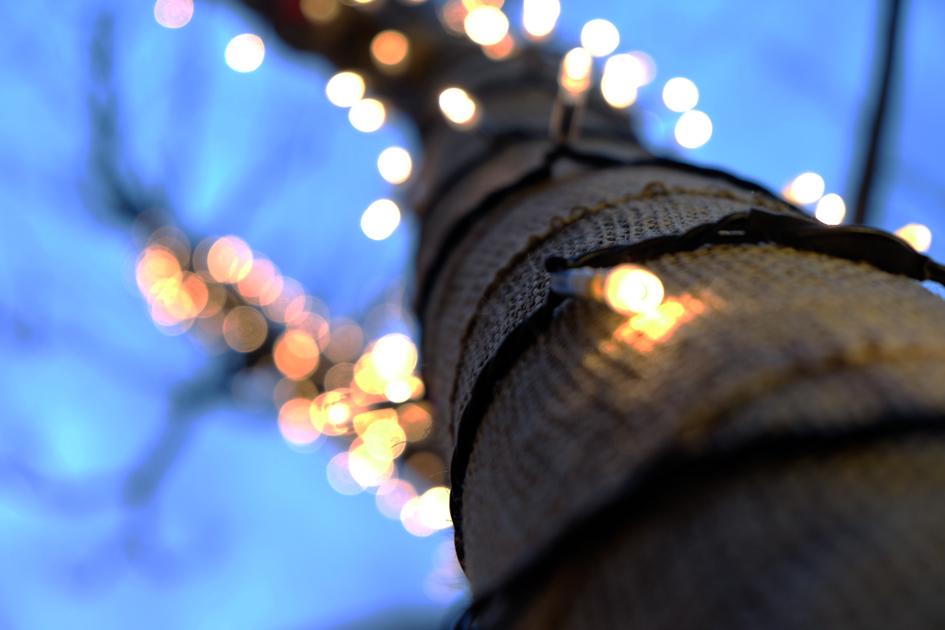 見上げれば冬の光 イルミネーションの木の下から撮影