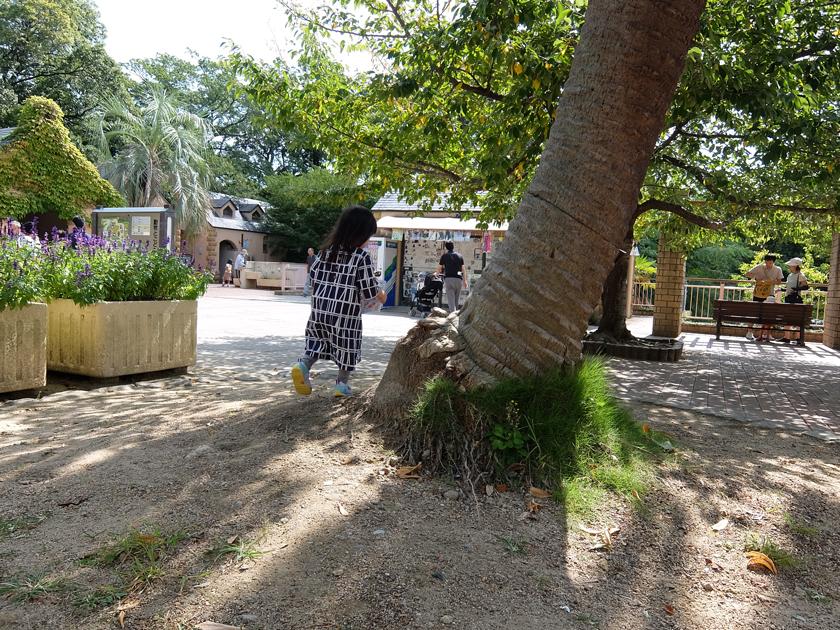 夫とXQ1_娘と神戸めぐり編_王子動物園_木の周りをぐるぐる